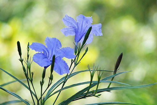 Flower, Cui Lu Li, Garden, Plant, 繽 紛