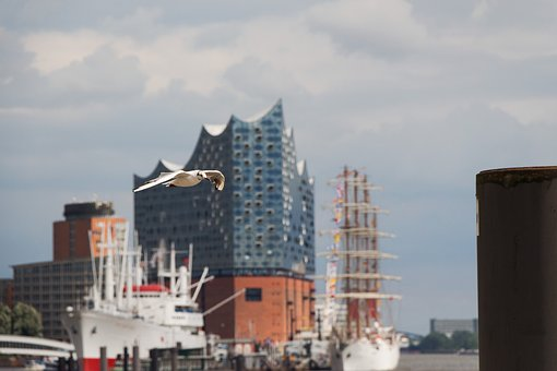 Elbe Philharmonic Hall, Seagull, Elphi, Animal