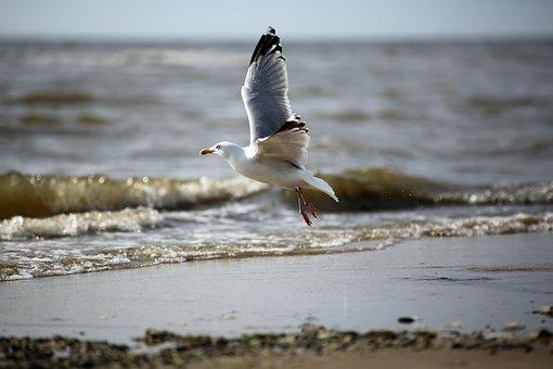 Seagull, Bird, Sea, Water, Start, Fly, Birds