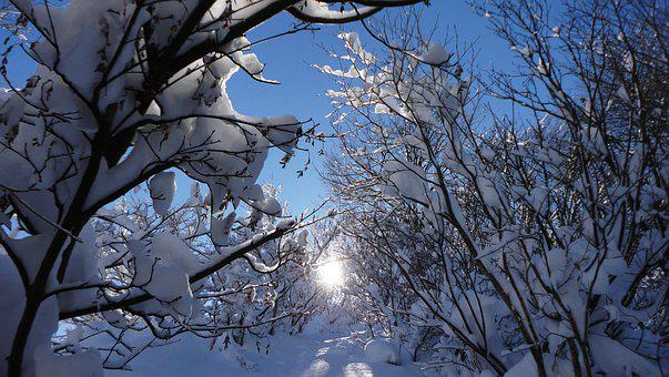 Sun, Snow, Sunbeams, Winter, Woods, Mountain, Sunshine