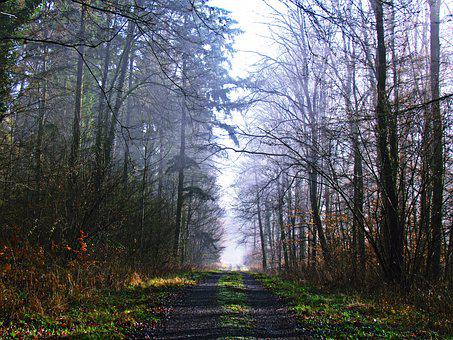 Forest, The Path, Lane, The Fog, Tree, Spacer, Foliage