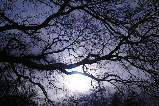 Darkness, Aesthetic, Dark, Tree, Nature, Kahl, Branches