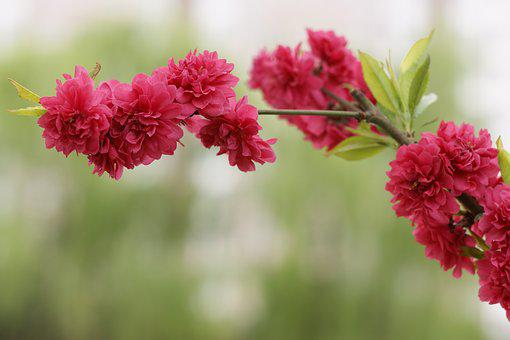 Not, Unknown Flower, Unknown