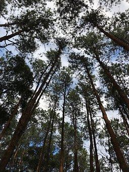 Tree, Green, Nature, Autumn Leaves, Pa, Bark, Plant