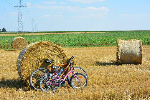 Bicycles, By Bike, Harvest, Corn, Field, Agriculture