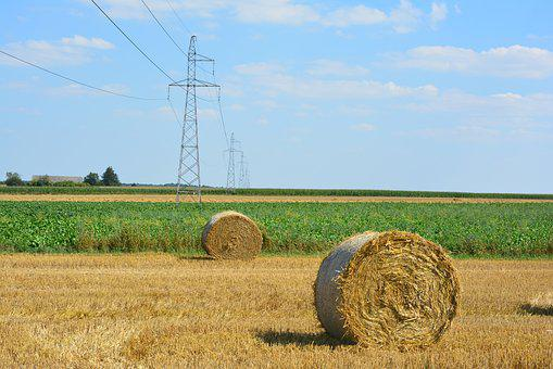 Harvest, Corn, Field, Agriculture, Straw