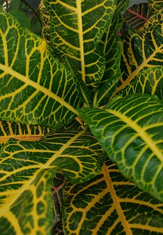 Leaf, Fresh, Yellowish Green, Plants, Floral