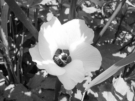Flower, Black And White, White, Nature, White Flower
