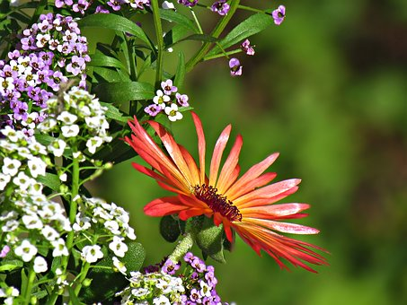 Gerbera, Flowers, Nature, The Delicacy, Gerberas