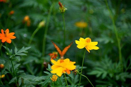 Nature, Garden, Butterfly, Plant, Green, Summer