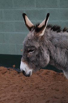 Donkey, Rescue, Animal, Mammal, Ass, Livestock, Nose