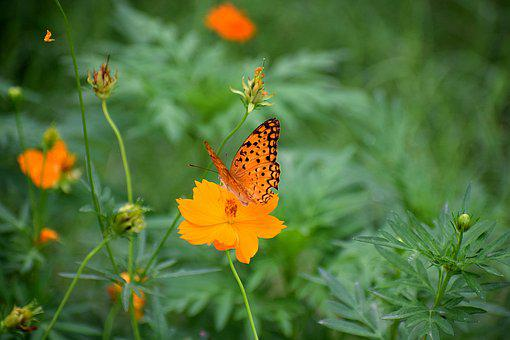 Nature, Flora, Butterfly, Natural, Plant, Spring