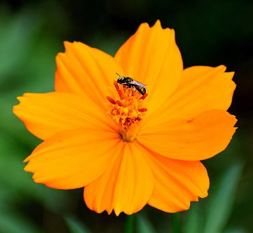 Nature, Flower, Insects, Plant, Floral, Blossom, Bloom