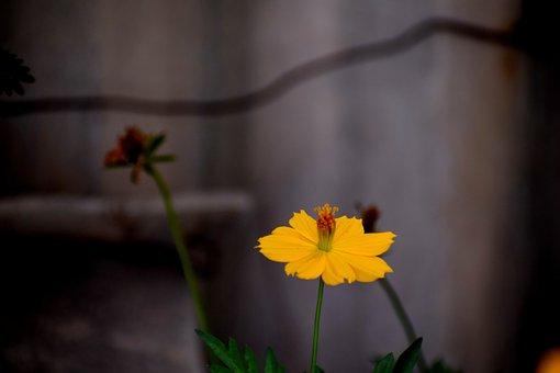 Flower, Nature, Floral, Summer, Plant, Spring, Natural