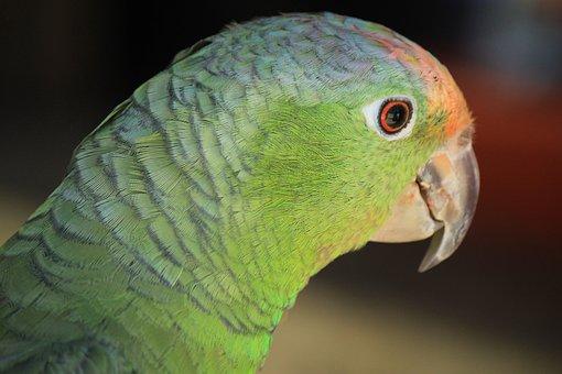 Macaw, Ave, Bird, Parrot, Animal, Tropical Bird