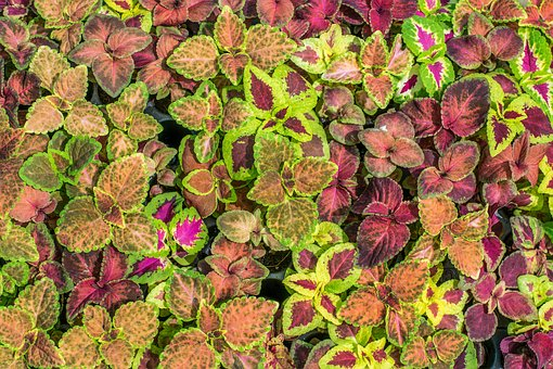 Colorful Leaves, Pattern, Texture, Leaf, Design, Plant