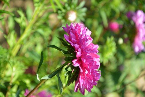 Flower, Plant, Profile Of Flower, Botany, Violet
