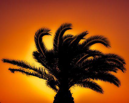 Palm Tree, Sunset, Sunlight, Orange, Summer, Exotic