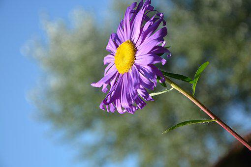 Flower, Profile Of Flower, Yellow, Purple, Nature