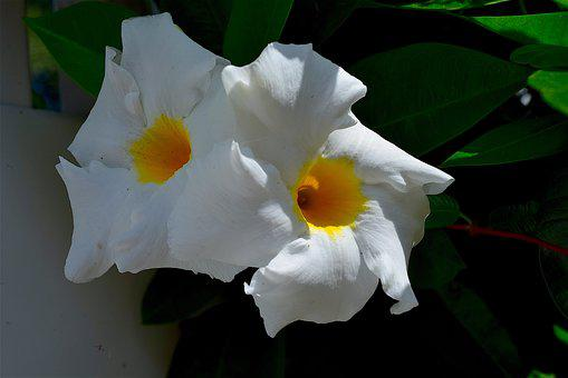 Flower, White, Petals, Nature, Floral, Plant, Blossom