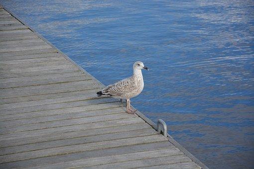 Seabird, Sea, Beach, Blue Sea, Pen, Beak, Nature