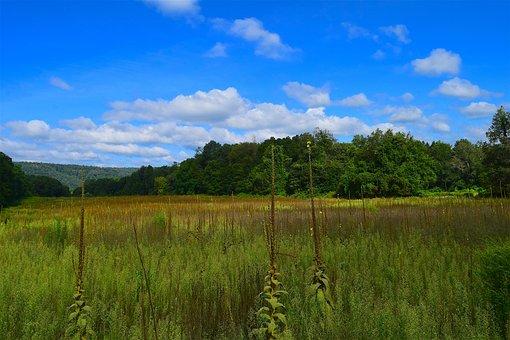 Field, Nature, Landscape, Sky, Blue, Clouds, Outdoor