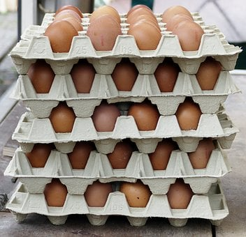 Egg, Chicken Eggs, Egg Carton, Lots Of Eggs