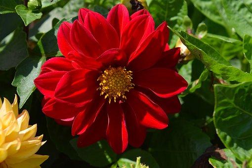 Flower, Red, Petals, Nature, Floral, Plant, Blossom