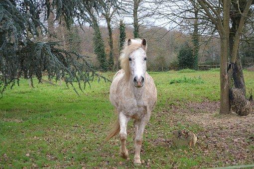 Horse, Mare Horse, Horseback Riding, Nature, Animal