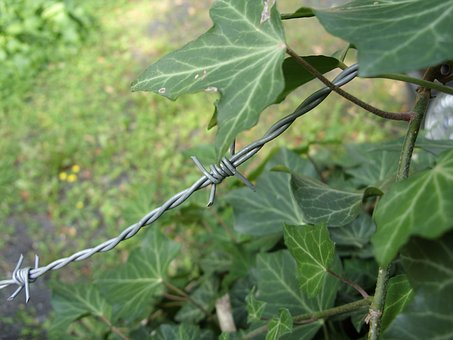 Barbed Wire, Just Had, Green