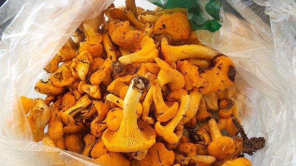 Mushrooms, Eierschwammerl, Chanterelles, Mushroom Dish