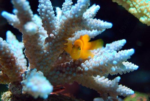 Fish, Reef, Coral, Yellow, Sea, Underwater, Ocean