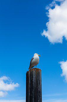 Gull, Tribe, Nature, Clouds, Birds, Pile, Sky
