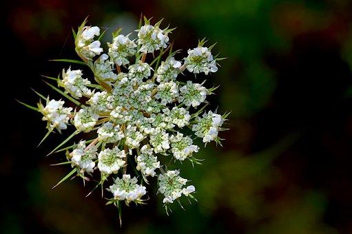 Flower, White, Nature, Floral, Plant, Blossom, Leaf