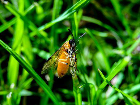 Macro, Insects, Nature, Animal, Summer, Wildlife, Bug