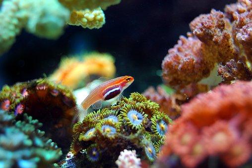 Fish, Coral, Reef, Sea, Underwater, Ocean, Marine
