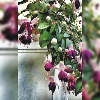 Flower, Love, Ks, Mom, Mohterflowers, Mother, Purple