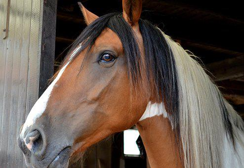 Horse, Pferdeportrait, Horse Head, Wildlife Photography