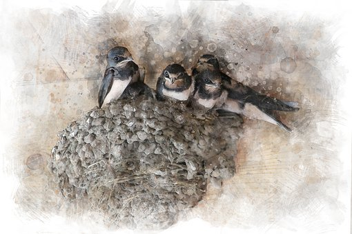 Swallows, Chicks, Jack, Birds, Feathered Race, Summer