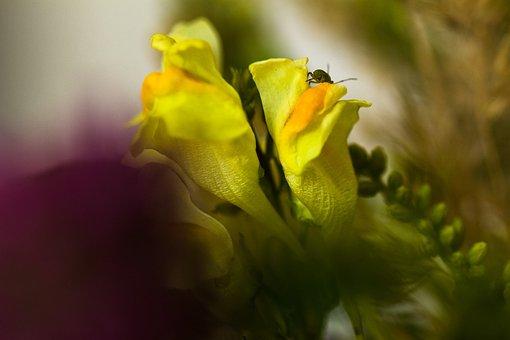 Nature, Flower, Blossom, Bloom, Bouquet, Wild Flower