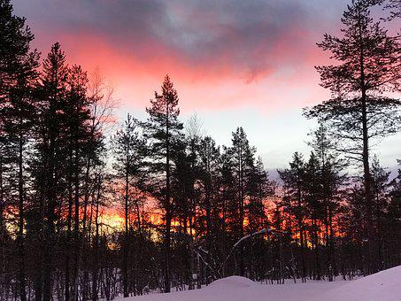 Finland, Trees, Nature, Sky, Winter, Snow, Warm Sky
