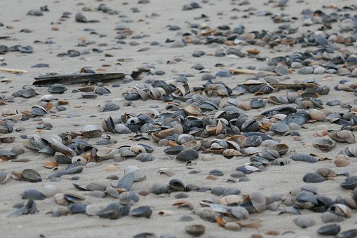 Flotsam, Mussels, Beach, Sea, Holiday, Sand