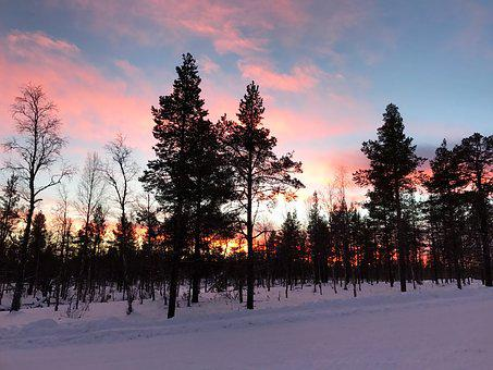 Finland, Trees, Winter, Sky, Color, Snow, Cold