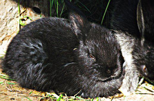 Rabbit, Black, Bunny, Animal, Nature