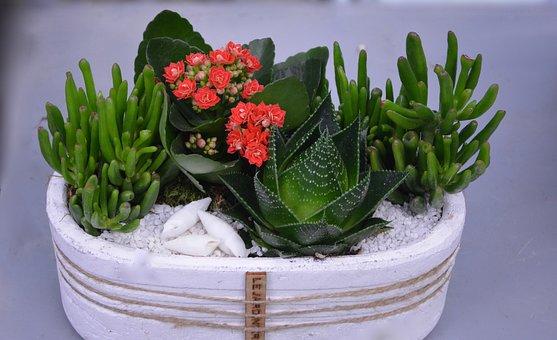 Flower, Floral Composition, Flowers Fat, Cactus