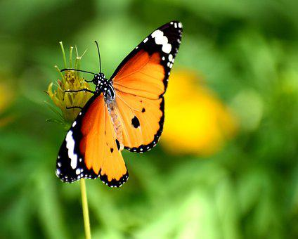 Nature, Butterfly, Summer, Spring, Colorful, Natural