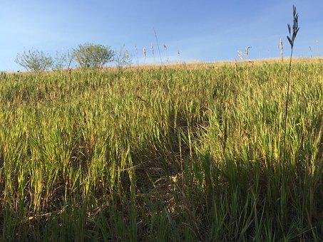 Field, Grass, Tree, Countryside, Land, Grass Field