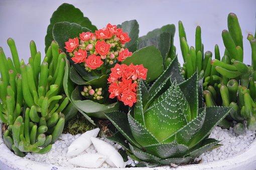 Flower, Floral Composition, Flower Fat, Cactus, Gift