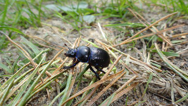 Beetle, Worm, Nature, Forest