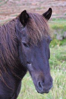 Horse, Head, Black, Grass, Farm, Nature, Portrait